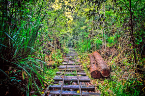 We came across the abandoned narrow gauge railway in the Brunei Jungle. I didn't walk to the far end but I understand it ended at an abandoned logging camp.